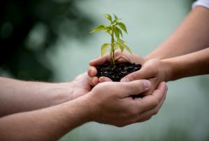 Joindre des mains pour planter une plante - La Vracrie - Epicerie en vrac - Coopérative participative au Vully (FR)