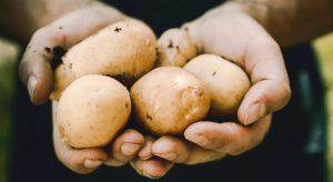 Deux mains tiennent des pommes-de-terres - La Vracrie - Epicerie en vrac - Coopérative participative au Vully (FR)