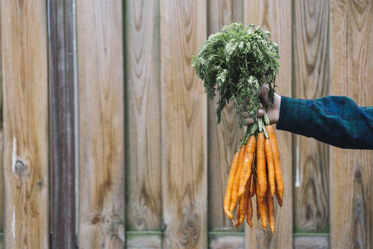 Une main tient une botte de carottes - La Vracrie - Epicerie en vrac - Coopérative participative au Vully (FR)